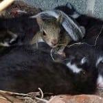 Kada je ova veverica ugledala leglo mačića, jedino što joj je preostalo je da im se pridruži!