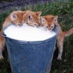 Ovo je mit u koji vlasnici mačaka najčešće veruju!