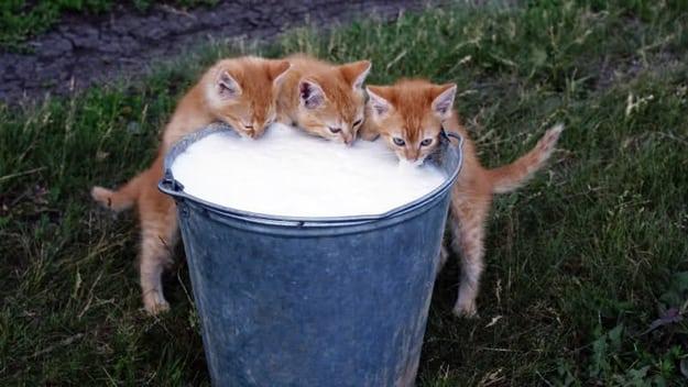 mleko petface