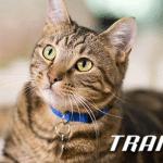 TRAINER: Sve o ishrani mačaka nakon sterilizacije!