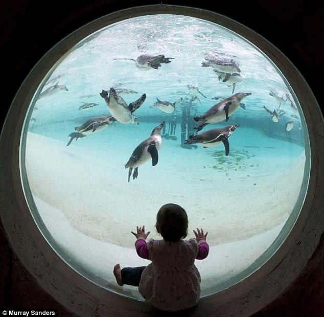 pingvinarijum petface