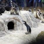 """PITALI SMO ZOO VRT: """"Optužbe su neosnovane, pingvinarijum će biti jedan od najboljih u Evropi""""!"""