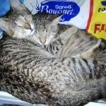 porodica slepih mačaka petface