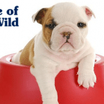 TASTE OF THE WILD: 10 zapovesti kada je u pitanju pravilna ishrana pasa!
