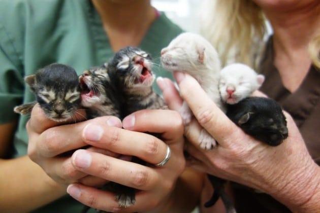 spasio 6 mačića petface