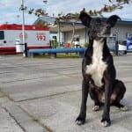 Iako je izgubio najboljeg prijatelja, pas Nego ga i dalje čeka na istom mestu!