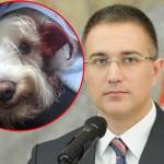 MINISTAR STEFANOVIĆ: Pronašli smo taksistu koji je pregazio psa, Taru!