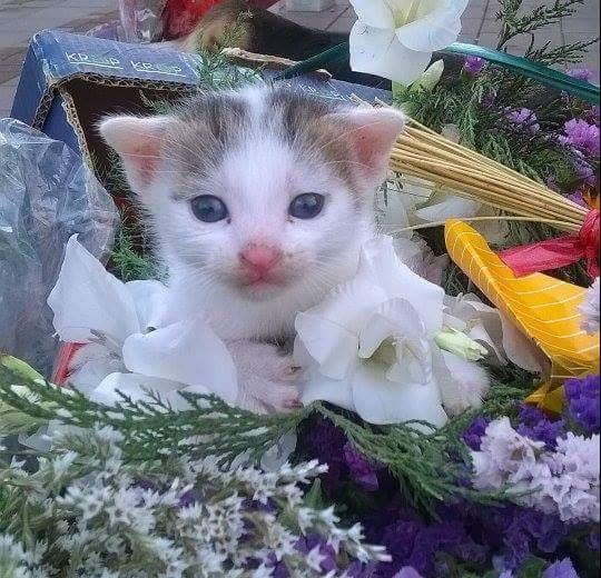prodaje cveće petface