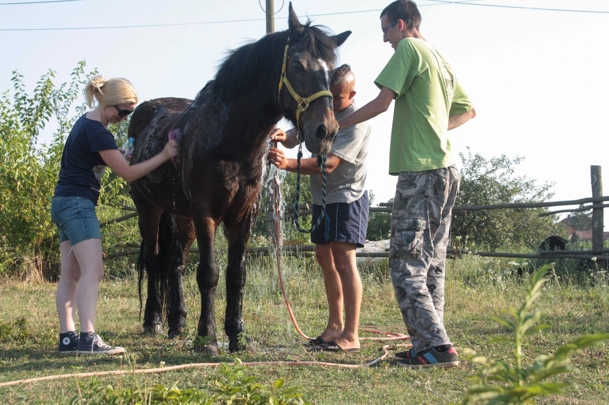 Azil za konje petface