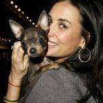 LJUBAV ILI…?: Demi Mur plaća 1.430$ nedeljno za akupunkturu psa!
