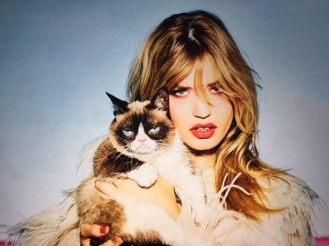 Grumpy cat petface
