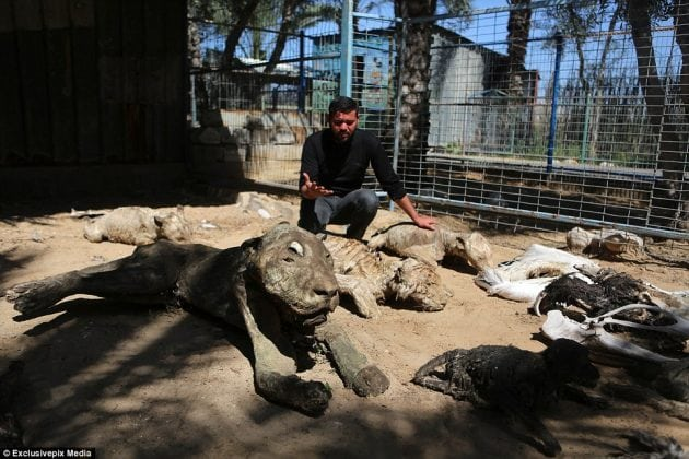 Najgori zoo-vrt petface