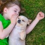 NOVI DOKAZI: Psi razumeju sve što im se govori!
