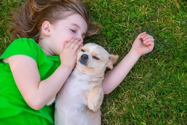 Psi razumeju petface