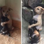 PRESLATKI SU: Dva šteneta ne prestaju da se grle od kad su udomljeni!
