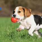 ROGZ: Saveti za dresuru šteneta za lepše manire!