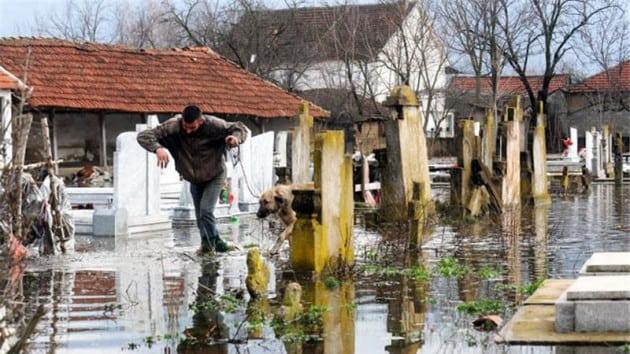 životinje iz poplavljenih područja petface