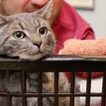 TRAINER: Mačak nekim čudom preživeo pranje u veš mašini!
