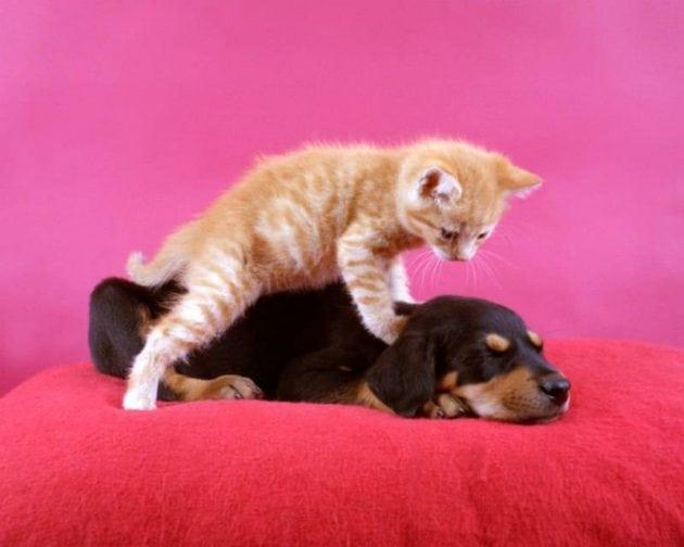 mačka voli masažu petface
