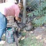 BAČKA PALANKA:  Ova žena svakog dana dolazi do blokova i brine o napuštenim macama!
