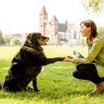 OBAVEZNO ŠTIVO: Priđite nepoznatom psu na pravi način!