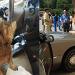 VIDEO: Pogledajte šta može da se desi, ako ostavite psa samog u automobilu!