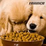 TRAINER: Hrana obogaćena antioksidantima za dug život!