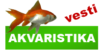 http://petface.net/kategorija/vesti/akvaristika/