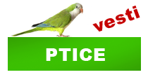 http://petface.net/kategorija/vesti/ptice/