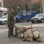 JAGODINA: Zlostavljač OPET pretukao konja? Danas PROTEST!