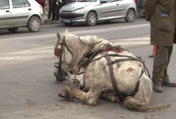 pretukao konja petface