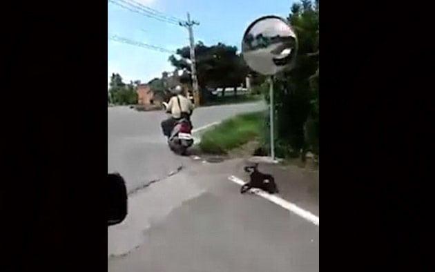 vezao psa petface