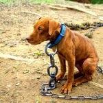 NOVI ZAKON: Nema više vezivanja pasa, posebno ukoliko su u boksu!