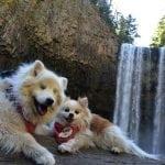 Ovo je pravo prijateljstvo: Zen pomaže svom slepom drugaru Hošiju!