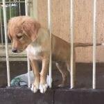 HITNO: Pas zarobljen na terasi stana na Voždovcu HITNO traži dom!