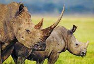 nosoroga petface