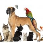 NOVI SAD: Psi i mačke zvanično postaju članovi porodice!