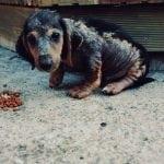 Ljubu su na ivici života pronašli na ulicama Kragujevca. Mole vas za POMOĆ!