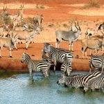 UGANDA: Divlje životinje umiru zbog suše!