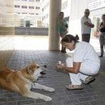 Akita Maja sedmi dan ispred bolnice čeka svoju vlasnicu!