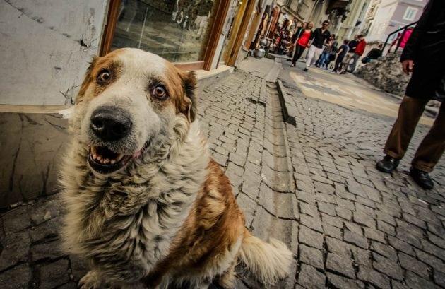 Nasilje nad životinjama petface
