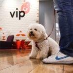 BRAVO ZA VIP: Od danas u sve Vip poslovnice možete ući sa kućnim ljubimcem!
