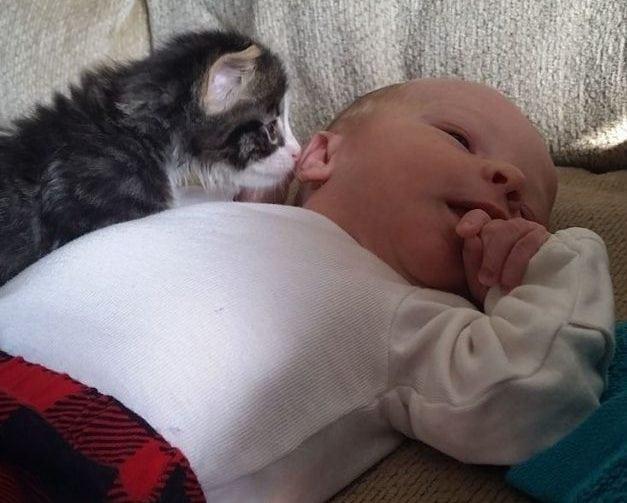 Spašena maca petface