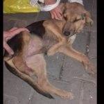 Tamara je uz pomoć 3 devojčice spasila psa, bez noge! Treba im pomoć!