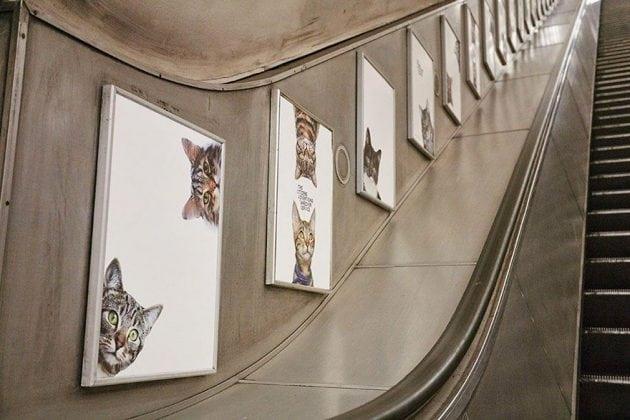 slikama maca petface