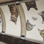 SUPER KAMPANJA: Metro oblepljen slikama maca sa porukom UDOMI!