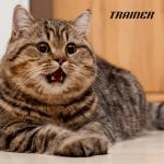 Kako da stavite mačku na dijetu?