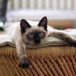 KRUŠEVAC: Stanimir (69) proglašen krivim zbog ubistva komšijske mačke!