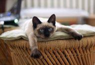 komšijske mačke petface