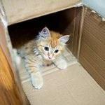 Zašto mačke toliko vole kutije?